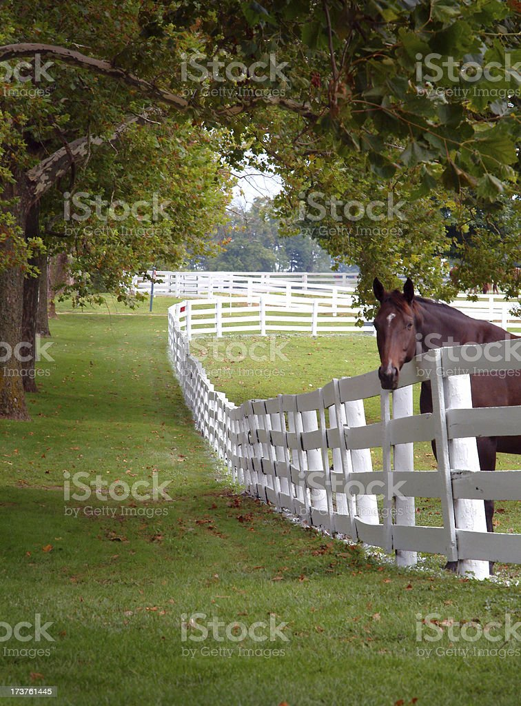 Kentucky Blue, I See You stock photo
