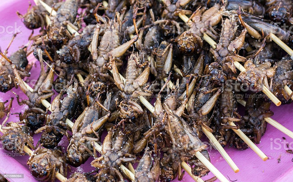 kentucky hornet boild street food stock photo