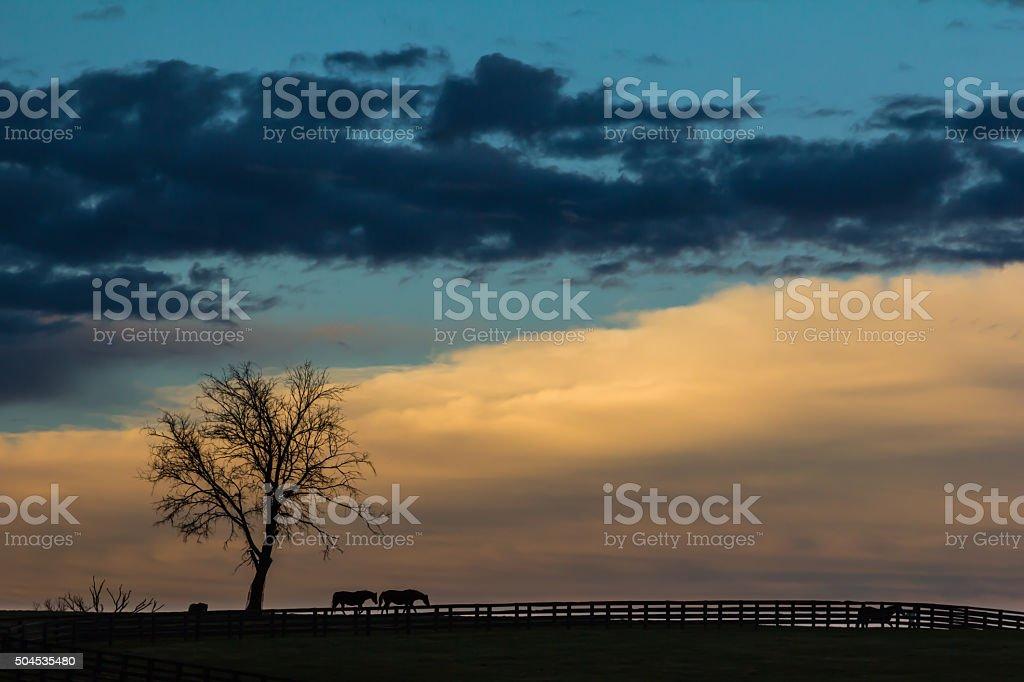 Kentucky Sunset Silhouette stock photo