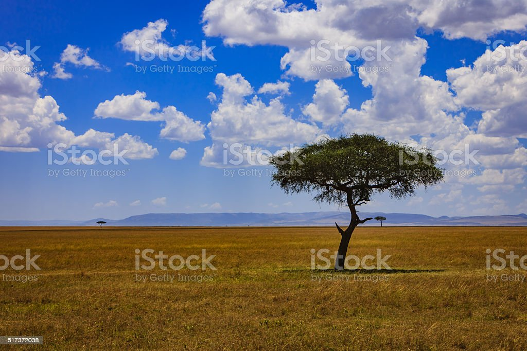 Kenya, East Africa - The Masai Mara, Rift Valley stock photo