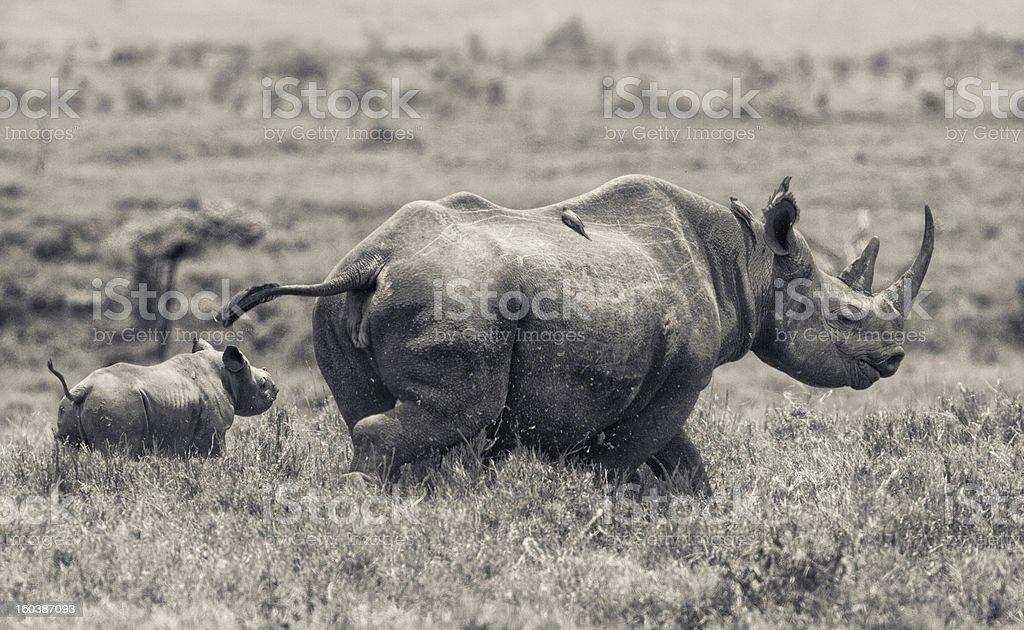 Kenya Safari, East Africa stock photo