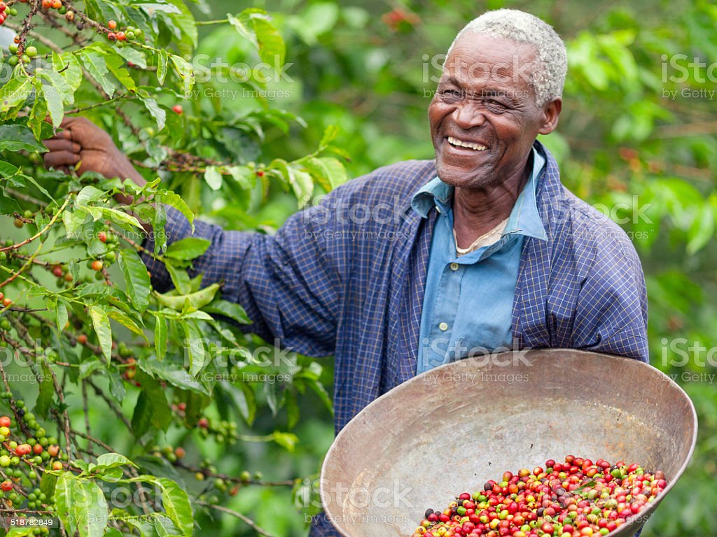 Kenyan Fair Trade Coffee Farmer stock photo