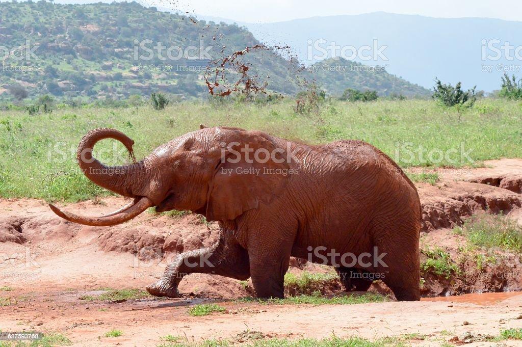 Kenya's red elephant stock photo