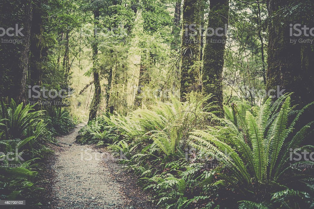 Kepler Track, New Zealand South Island stock photo