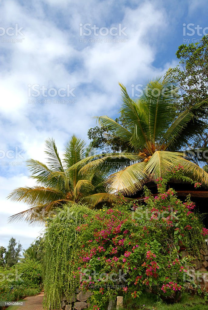 Kerala palmtrees royalty-free stock photo