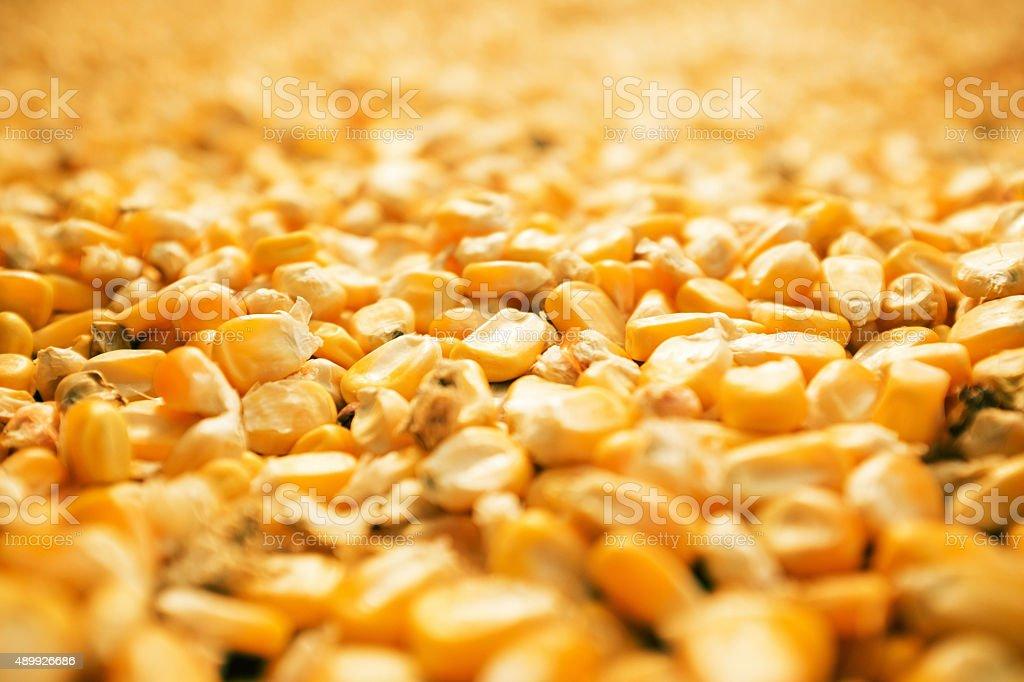 Kernels of Corn Background stock photo