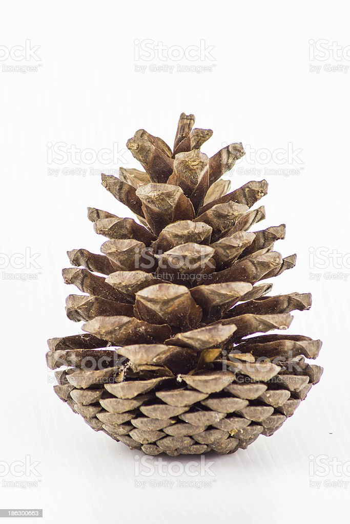 Kesiya  pine  cones stock photo