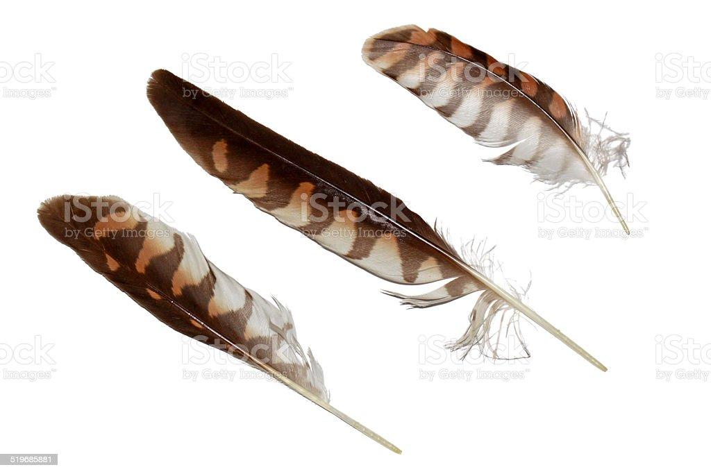 Kestrel falcon feathers set isolated on white stock photo