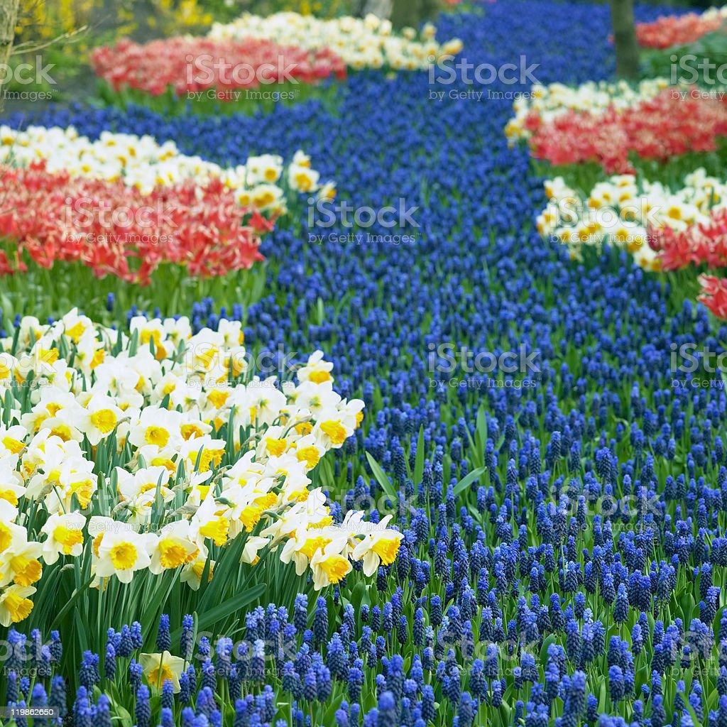 Keukenhof Gardens royalty-free stock photo
