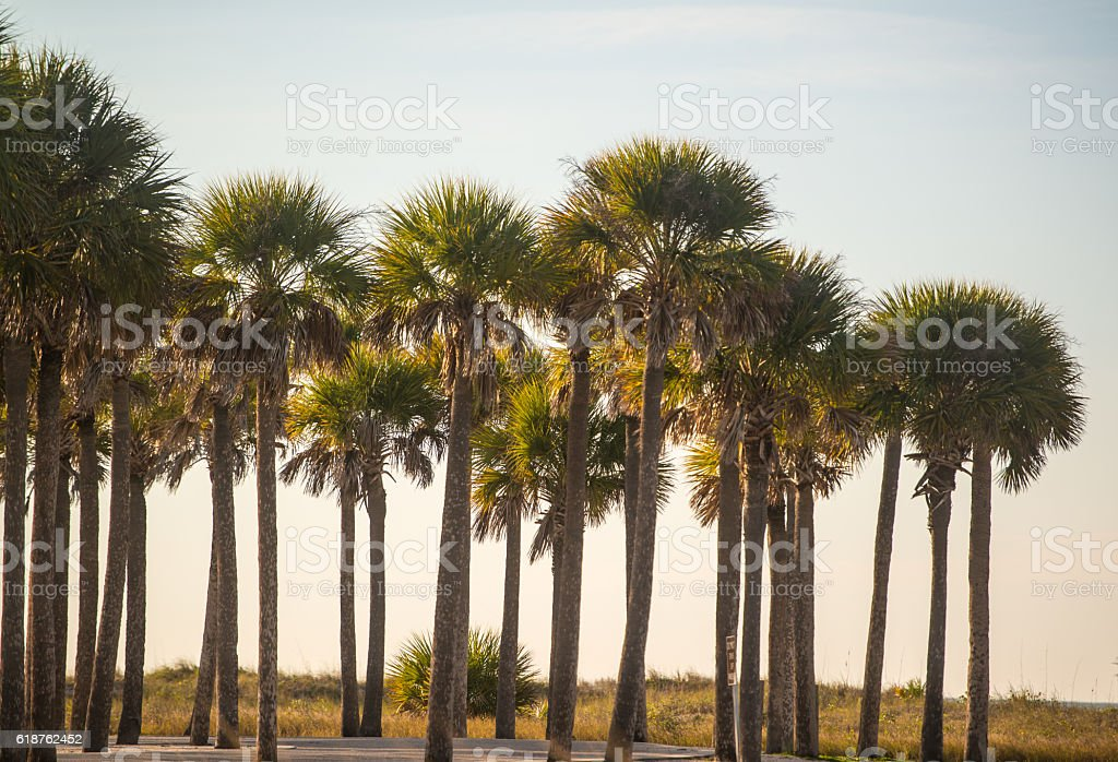 Key sands park, Clearwater, Florida, USA stock photo