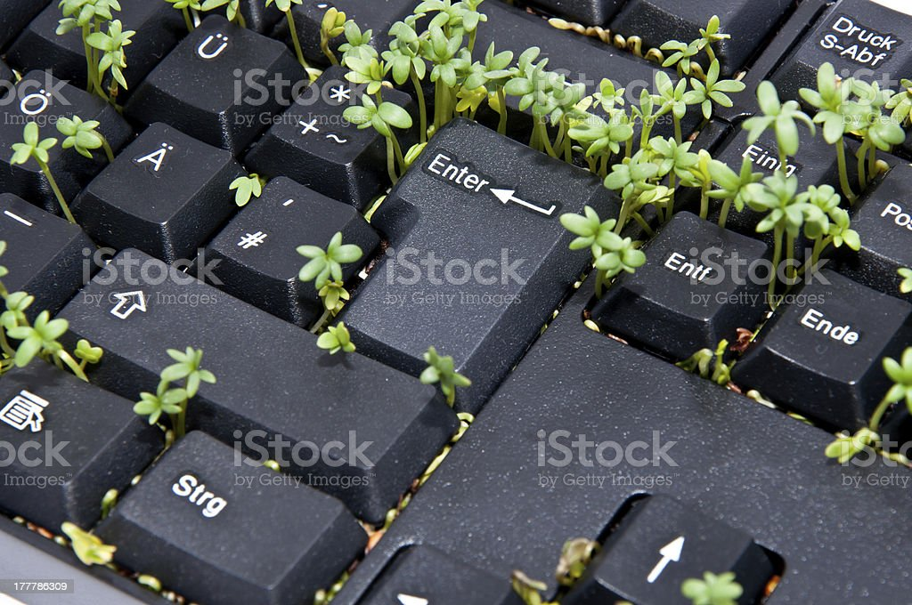 Keyboard with garden cress royalty-free stock photo