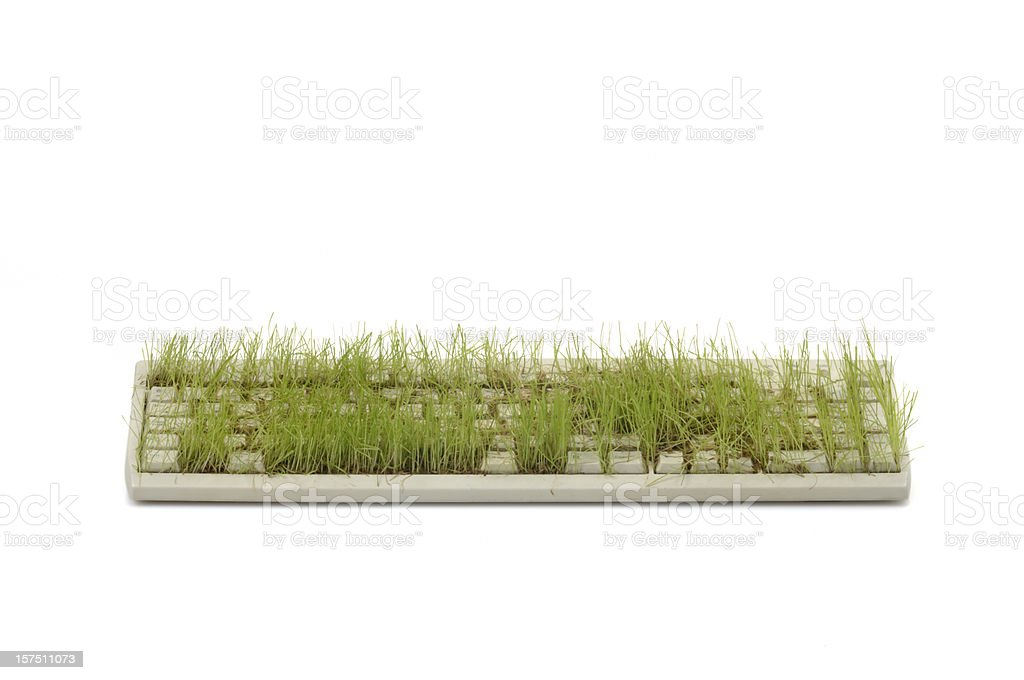 Keyboard With Grass (front) stock photo