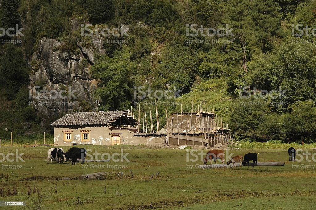 Kham Tibet: Tibetan house construction (Yunnan, China) stock photo