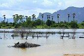 Khao Nang Phanthurat Forest Park, Thailand
