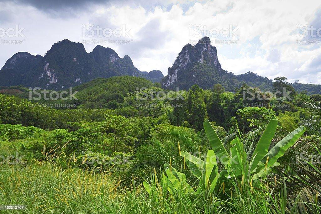 Khao Sok National Parkin Thailand stock photo