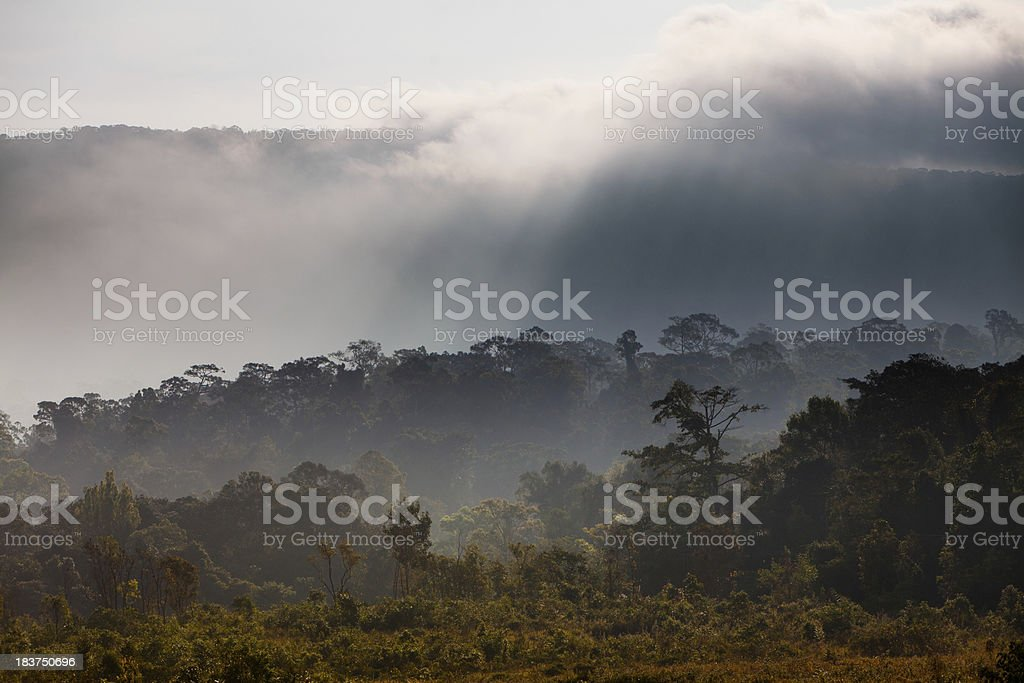 Khao Yai National Park in Thailand royalty-free stock photo
