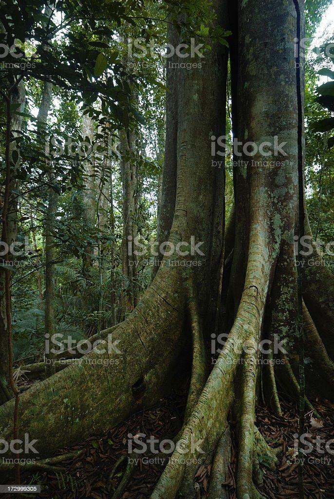 Khao Yai National Park royalty-free stock photo