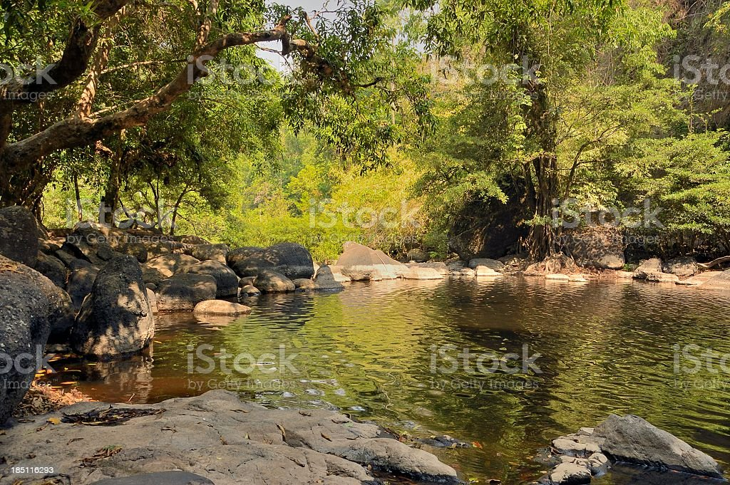 Khao Yai National Park Pond stock photo