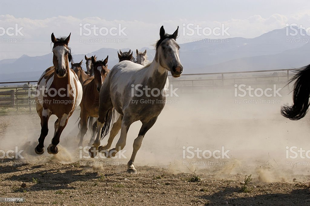Kicking up Dust in Montana royalty-free stock photo