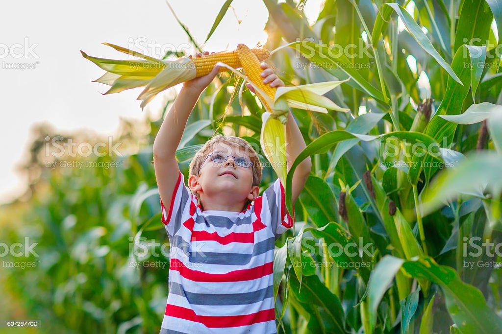 Kid boy with sweet corn on field outdoors stock photo