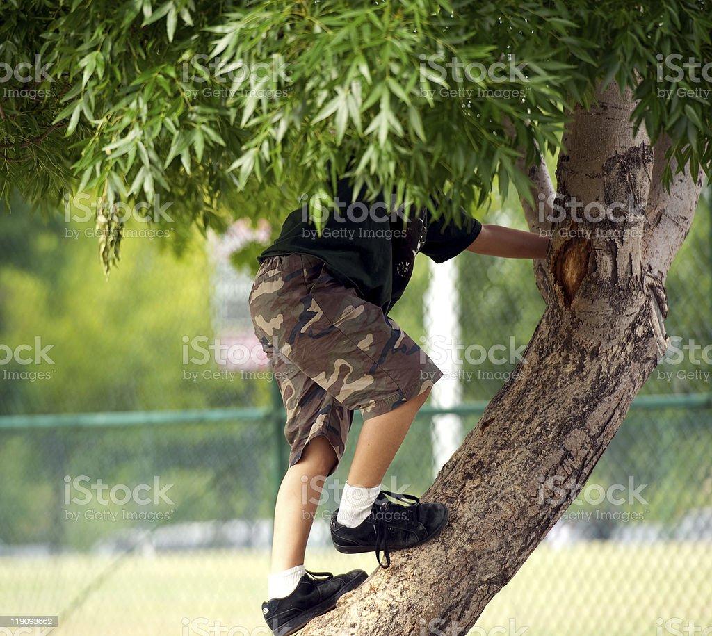kid climbing a tree stock photo