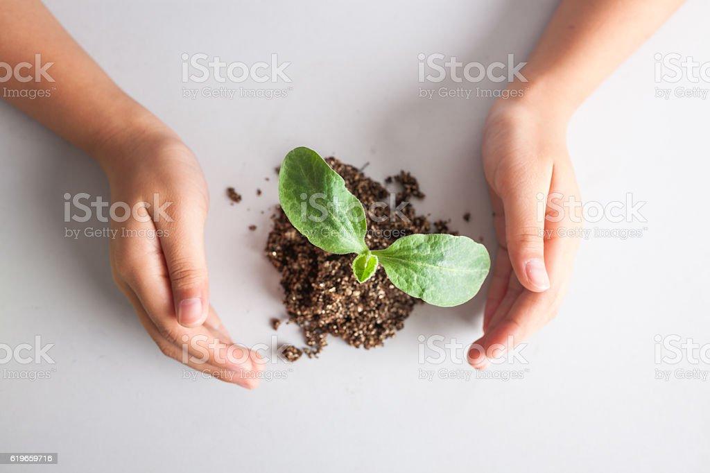 kid hand with pumpkin sapling stock photo