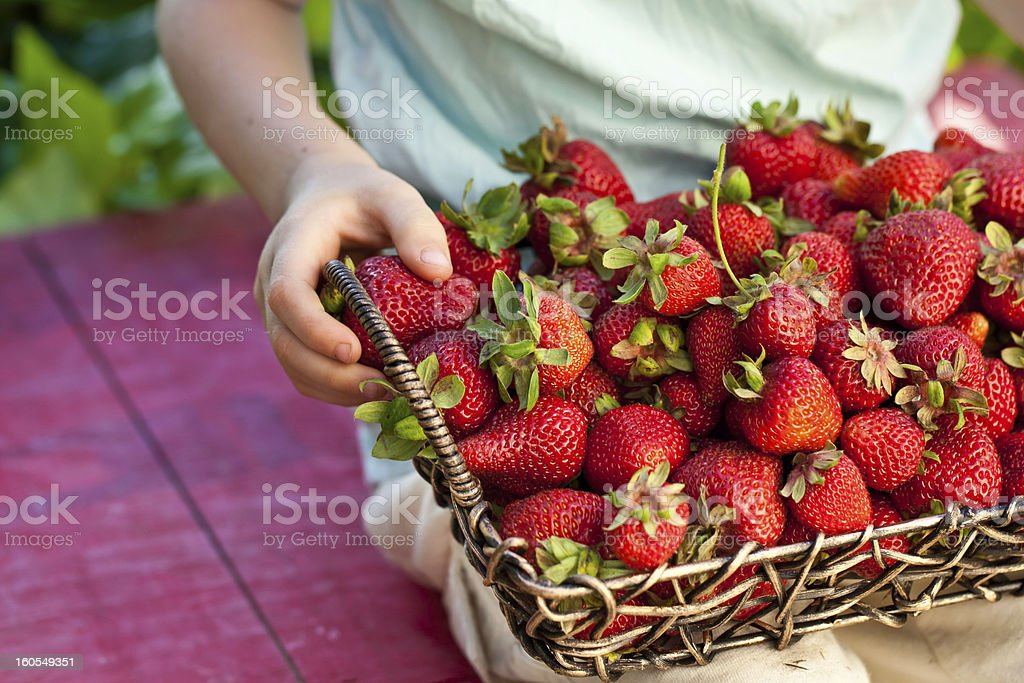 Kid, holding a basket of strawberries royalty-free stock photo
