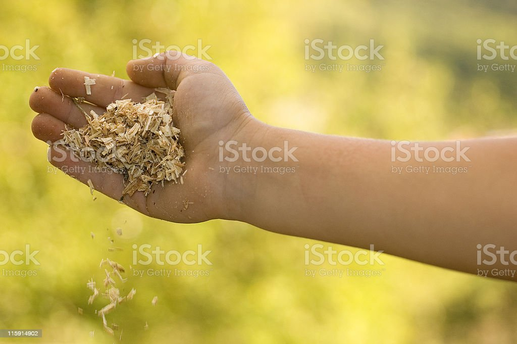 Kid holding sawdust royalty-free stock photo