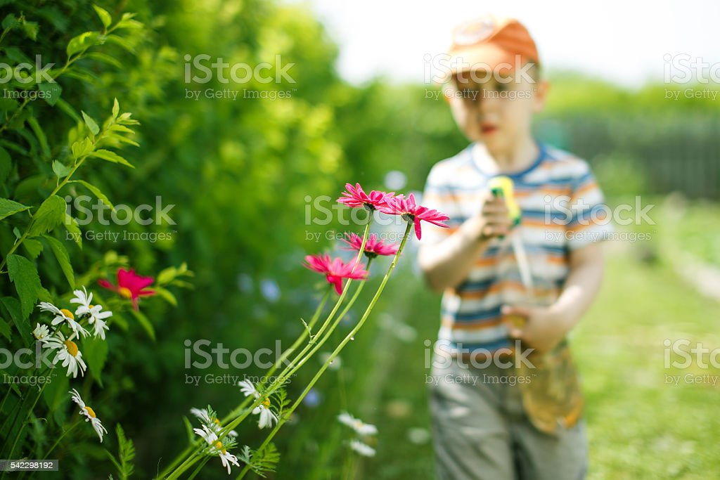 kid in the garden helps to spray plants stock photo