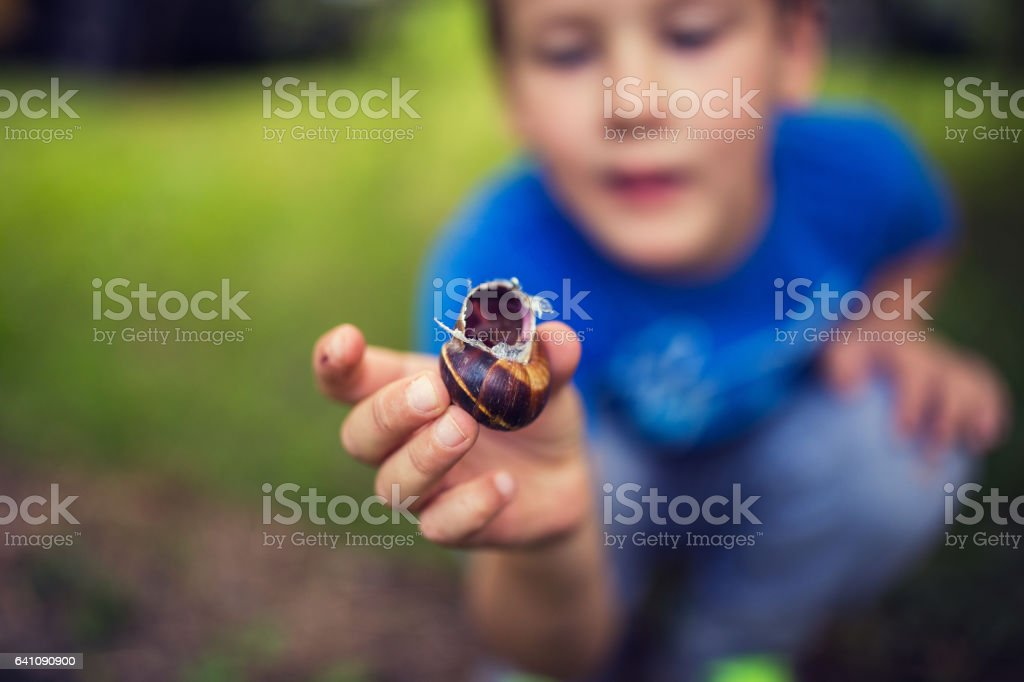 Kid observing snail stock photo