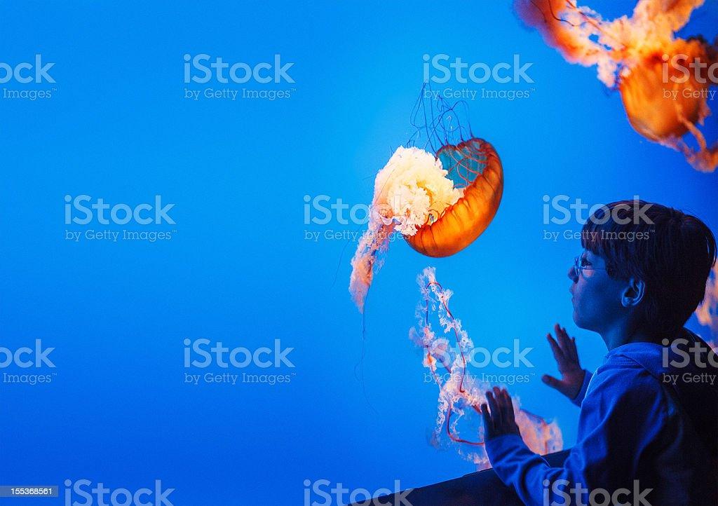 kid watching jellyfish at the aquarium stock photo