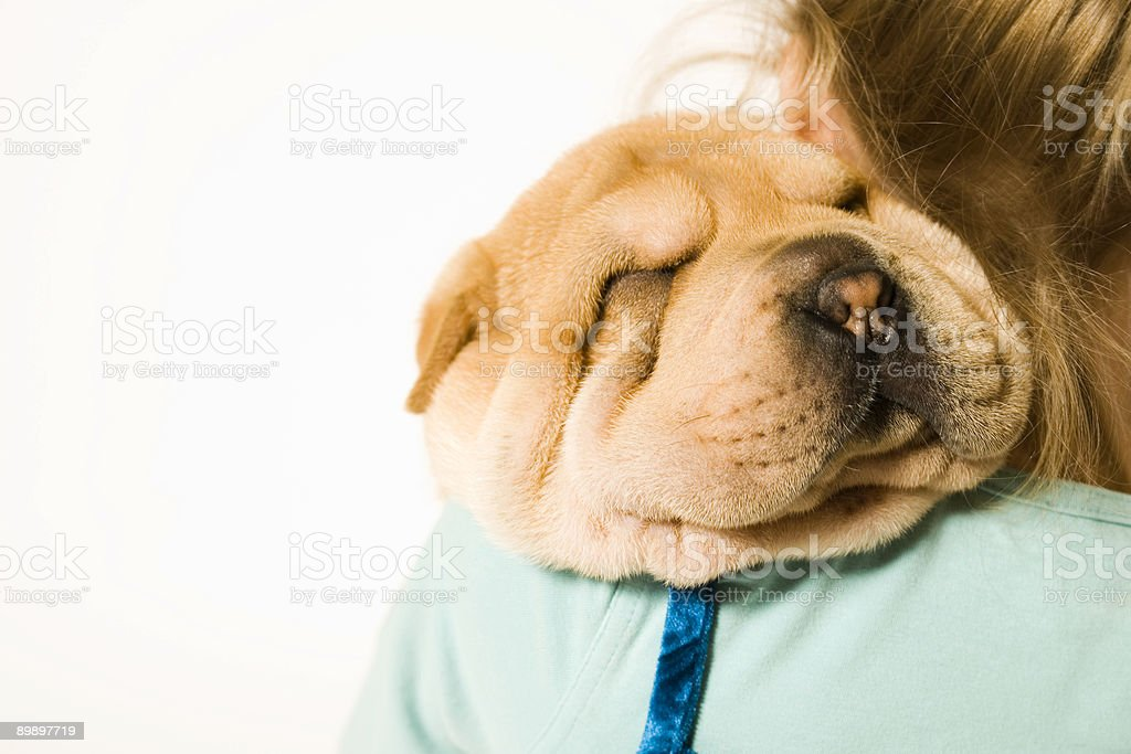 Kid with a Puppy royalty-free stock photo