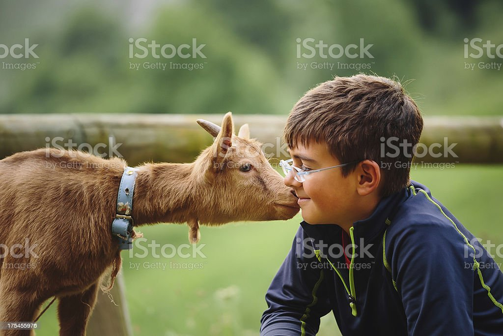 kid with baby goat stock photo