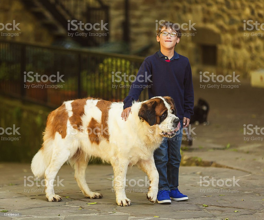kid with st. bernard dog stock photo