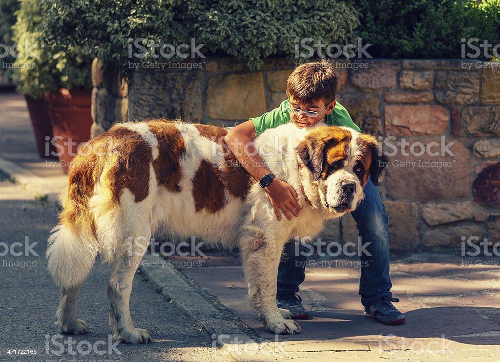 kid with st. bernard dog stock photo