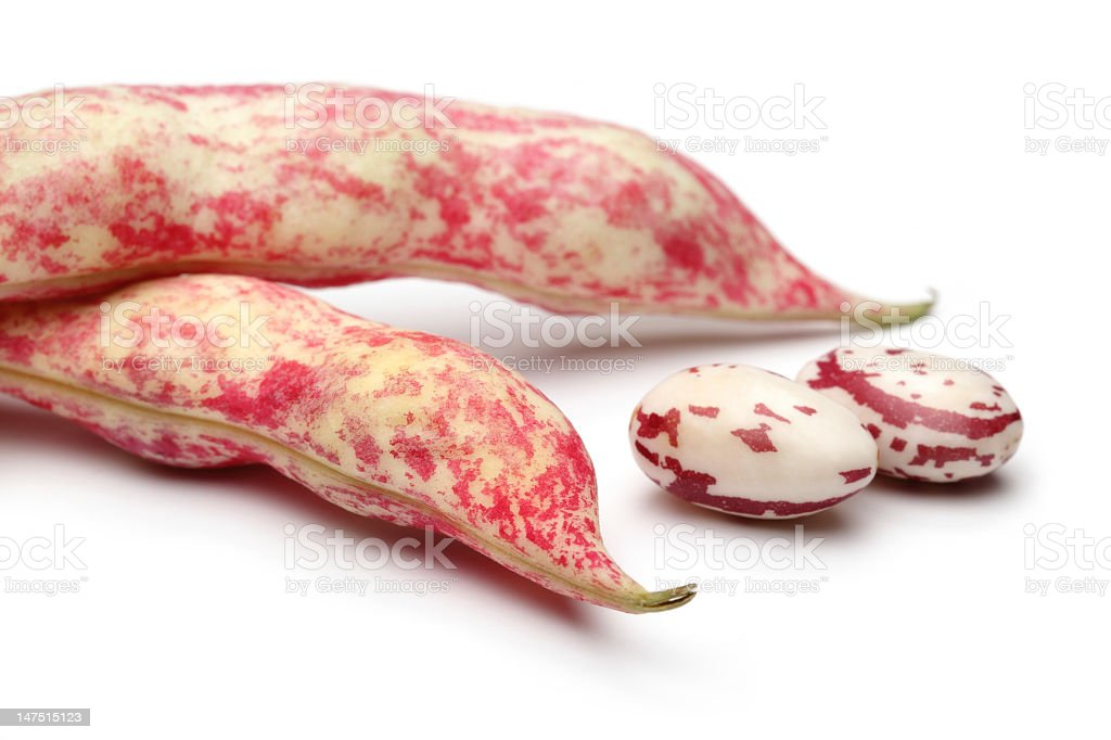 Kidney Bean stock photo