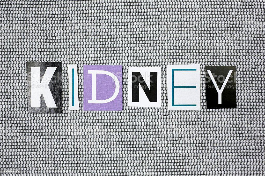 kidney concept stock photo