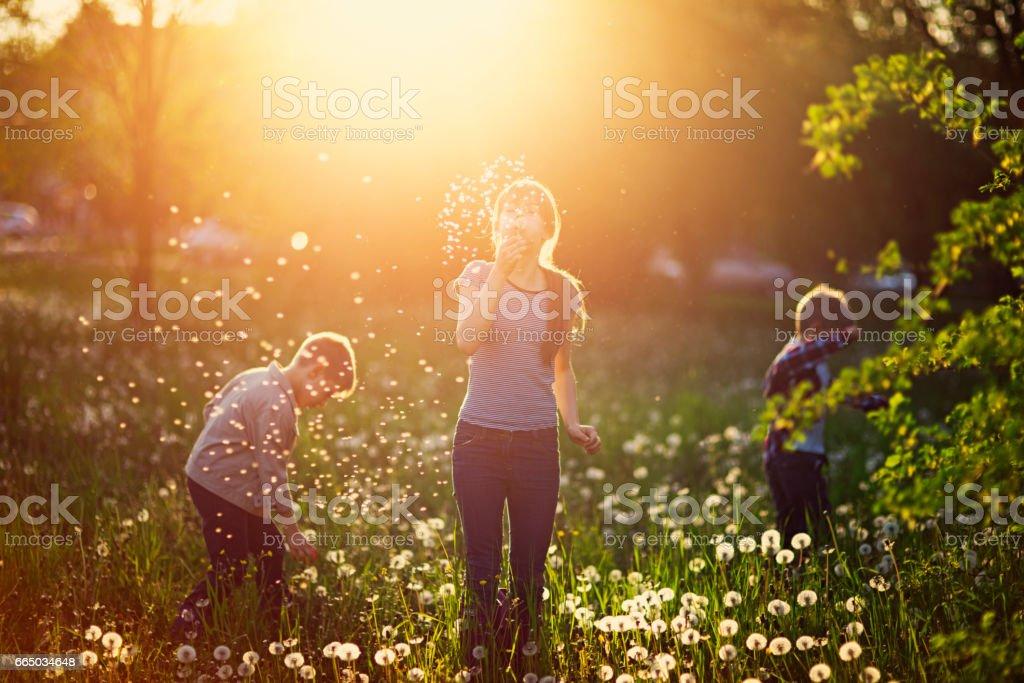 Kids enjoying spring dandelions stock photo