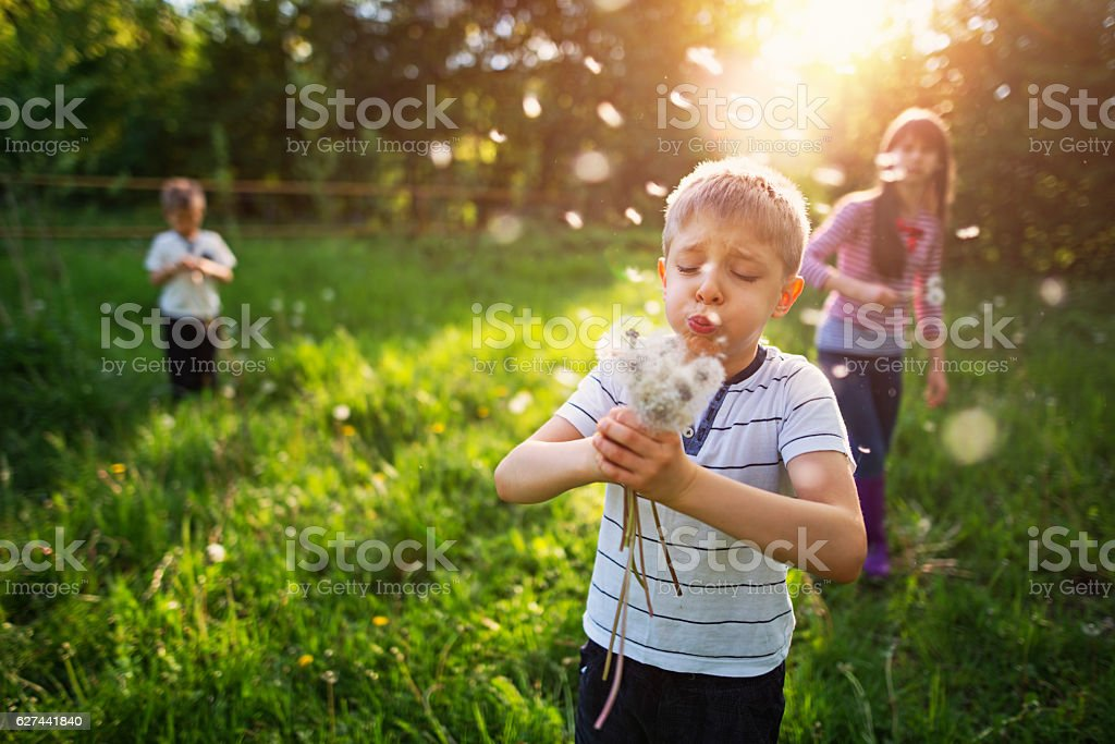 Kids enjoying spring in dandelion field stock photo