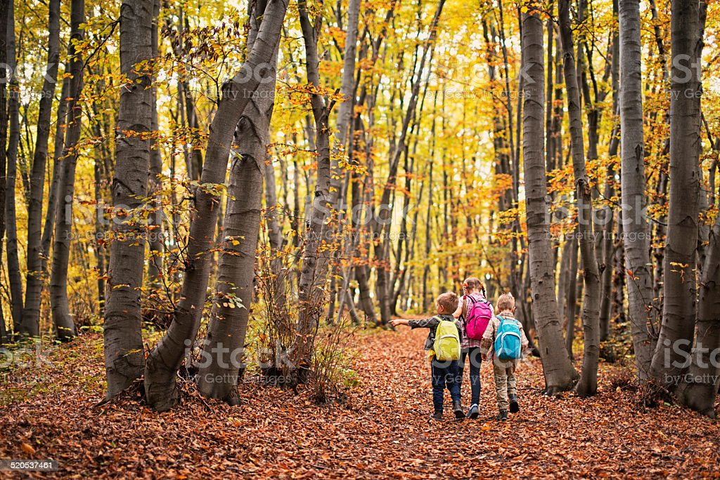 Kids hiking in autumn beech forest stock photo