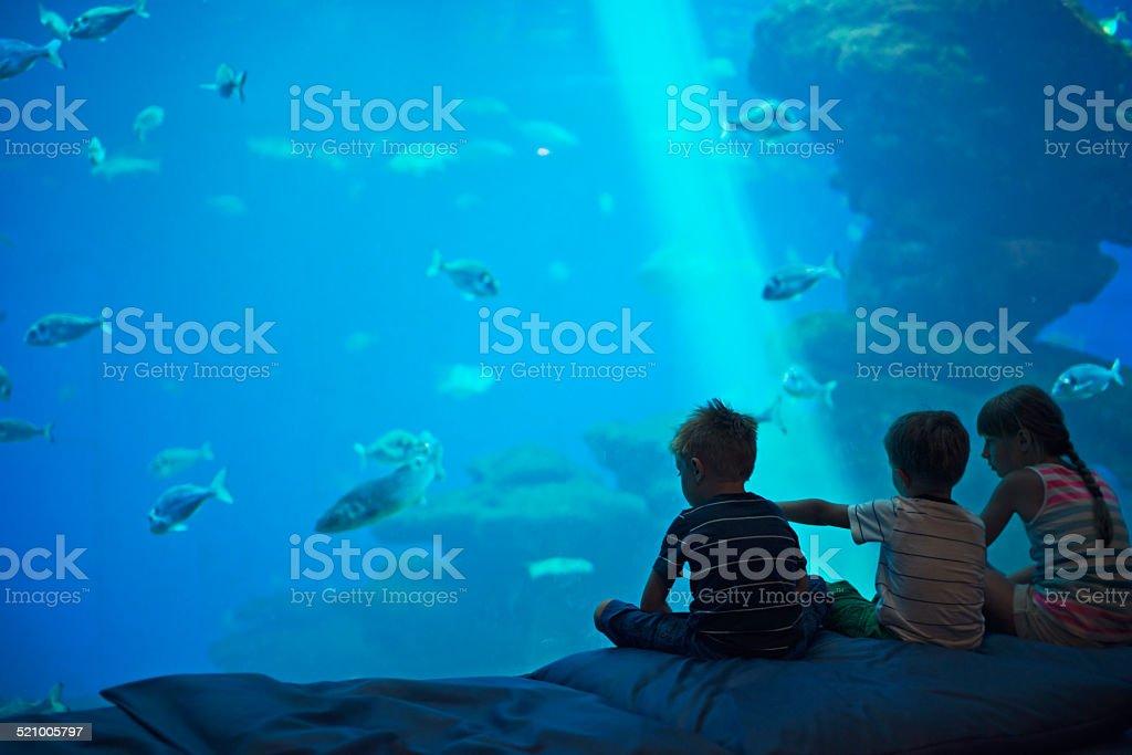 Kids in a huge aquarium looking at fish stock photo