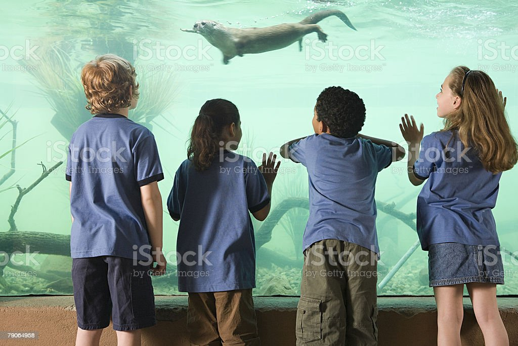 Kids looking at otter swimming stock photo