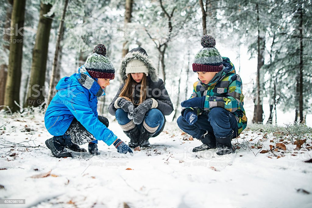 Kids observing animal tracks on snow in winter forest stock photo