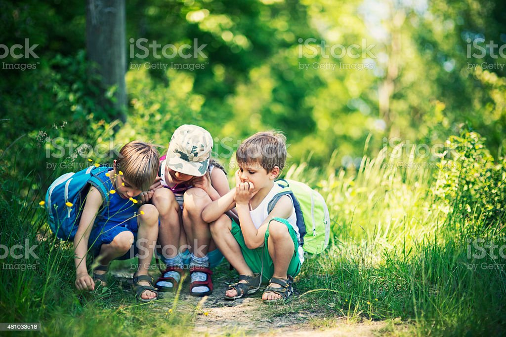 Kids observing bugs in forest stock photo