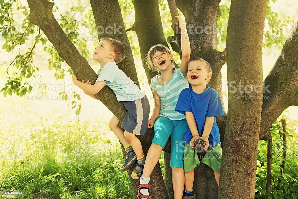 Kids on tree stock photo
