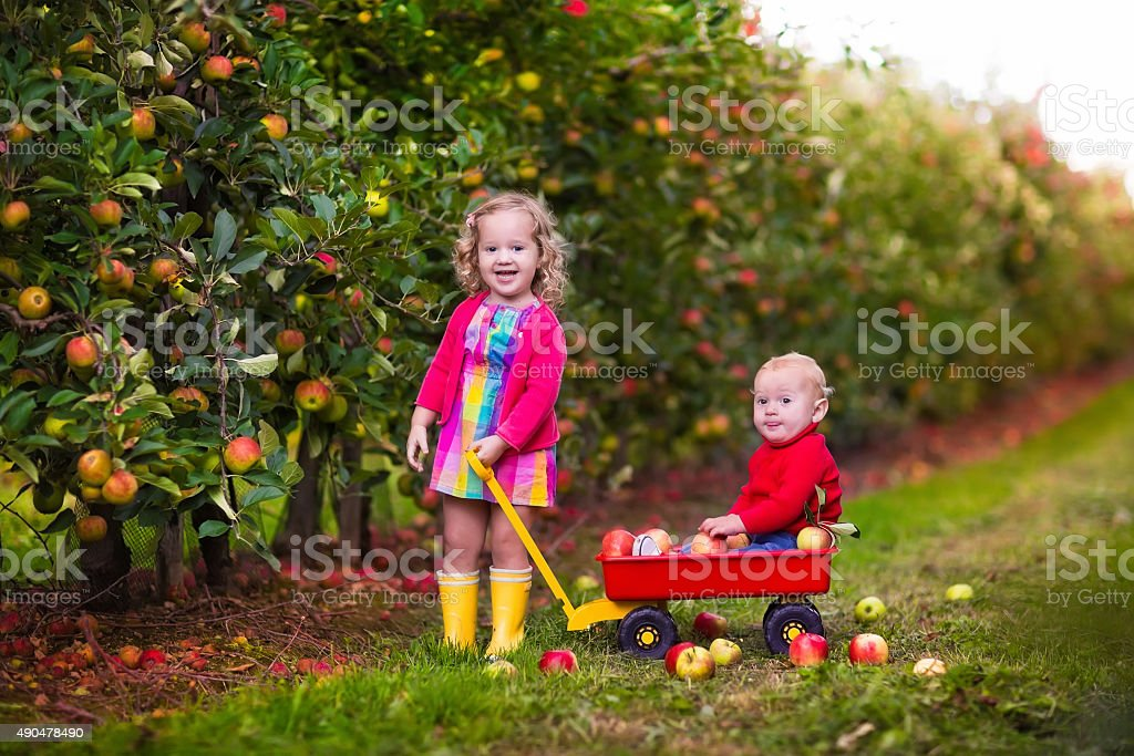 Kids picking apples from tree stock photo