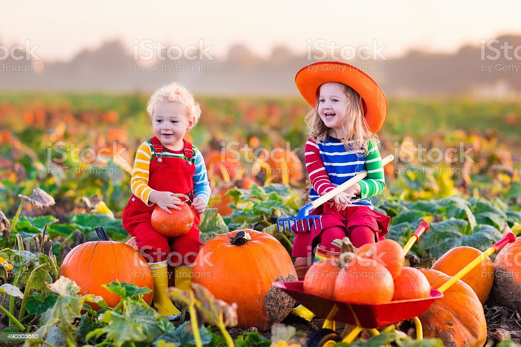 Kids picking pumpkins on Halloween pumpkin patch stock photo