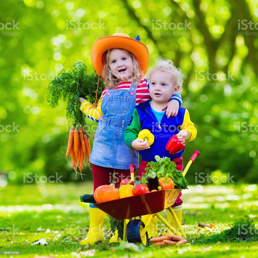 Kids picking vegetables on organic farm stock photo