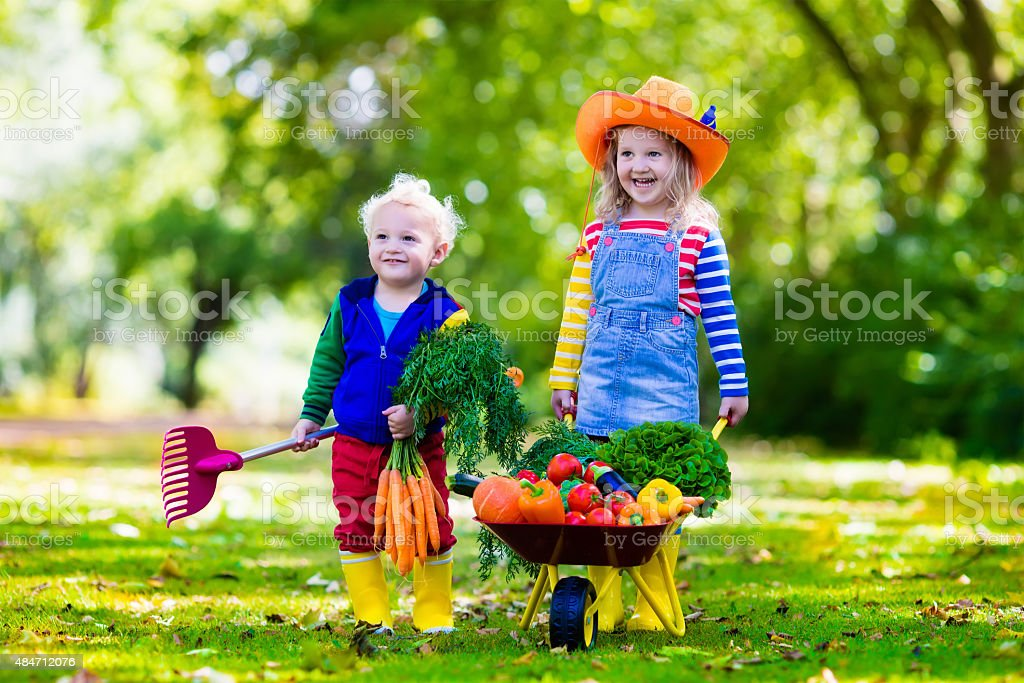 Kids picking vegetables on organic farm stock photo