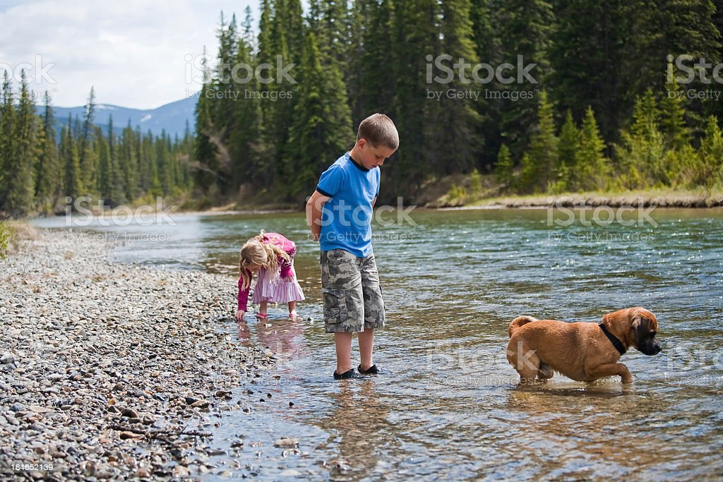Kids playing in creek with a dog royalty-free stock photo